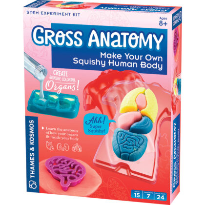 Thames & Kosmos Gross Anatomy - Slime casts of organs arranged in a plastic torso, complete with scalpel for pretend play.