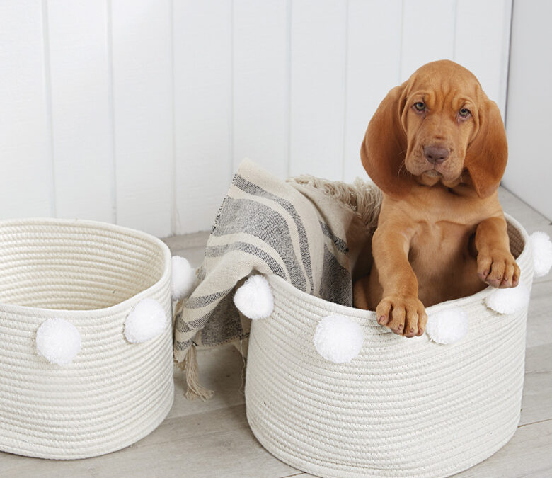 Fashionable organization is possible with this set of  nested cream cotton baskets featuring white pom-poms around the exterior rim. (Adorable puppy not included.)