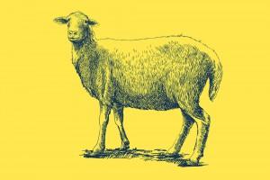 sheep-slide-feb-16